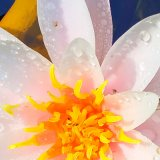 Neu: Mediation & Entspannung online